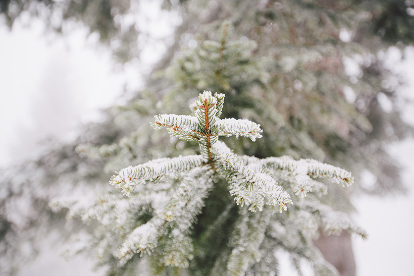 winter hochzeit fotograf bayern berchtesgaden berge alpen wedding