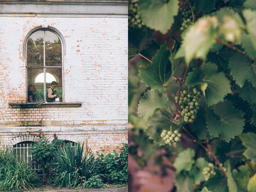 www.cornelia-lietz.com www.cupcakephotography.net