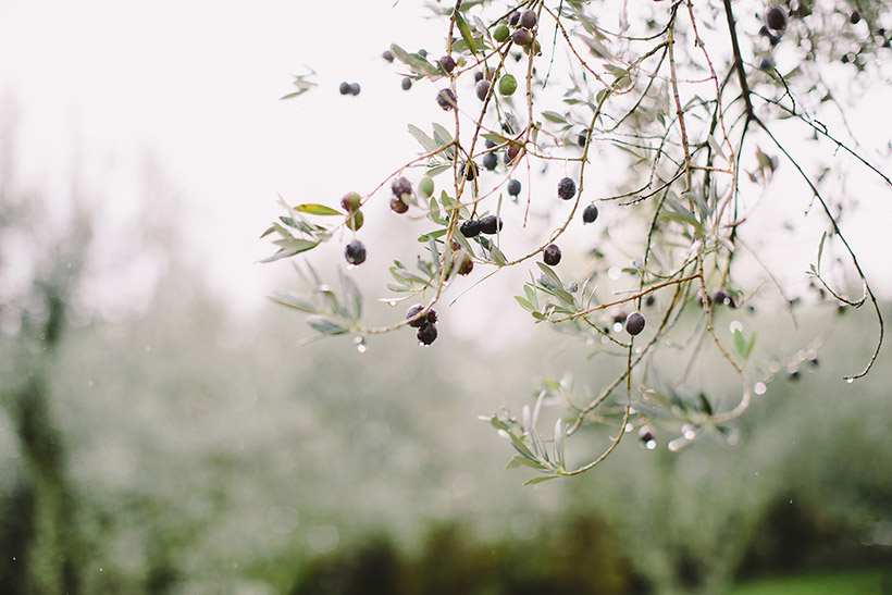 Cornelia Lietz Photography